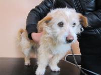 2013-02-22 найдена собака -мальчик  возле ресторана ''НАТАЛИ'' 3 мкр.(867015470, 864525568)