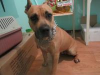 Найдена собака-девочка (возвращена хозяину)