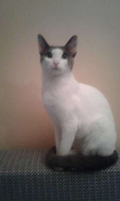 пропала кошка на дачax Pavasaris, массив D.   зовут Муська, 2 года  может кто нибудь видел или приютил?  будем благодарны