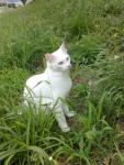 Пропала кошка в районе Эжеринаса, около 3 недель назад.(помогите найти за вознаграждение) 862517515